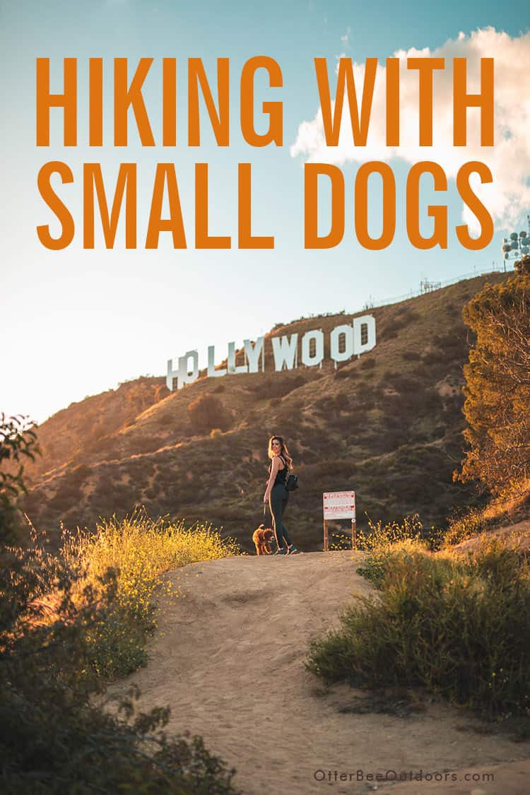 A woman hiking with her small dog on a trail in the Hollywood hills. The image text says... Hiking With Small Dogs.