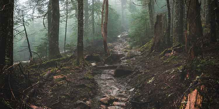 A muddy hiking trail that is eroding due to lack of trail maintenance and trail protection.