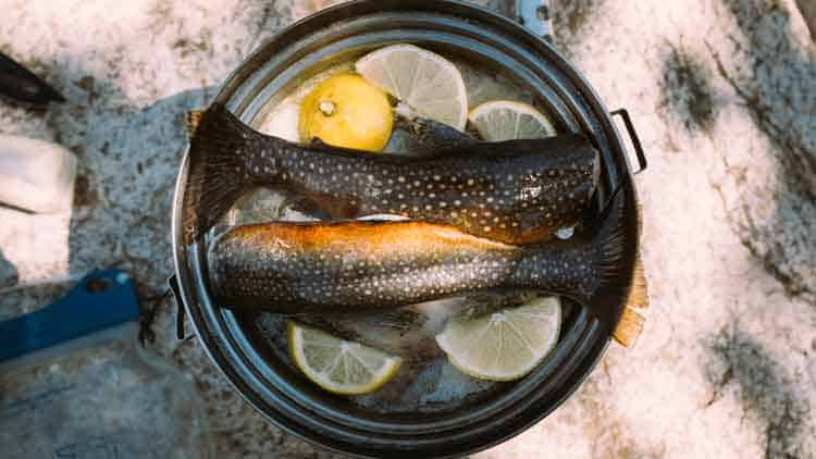 Trout caught on fly fishing-camping trip being cooked in a pan at the campsite.