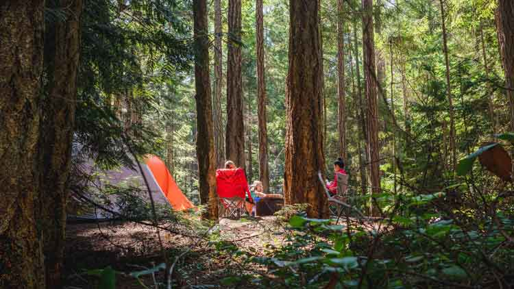 A heavily wooded campsite with campers sitting in chairs outside their tent.