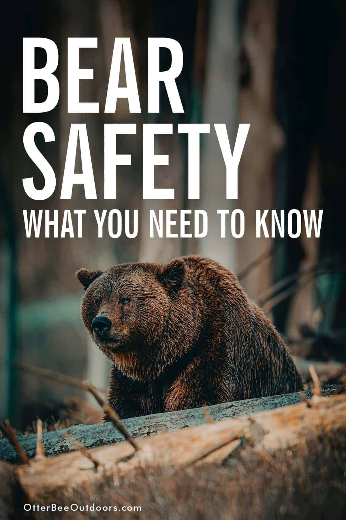 A bear in the woods. What you need to know to stay safe in bear country.