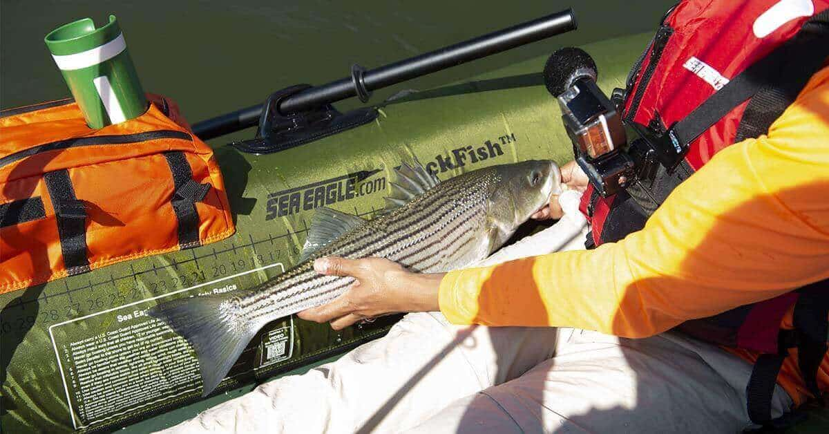 Measuring a catch using the built-in fish ruler on the Sea Eagle PackFish7 inflatable boat.